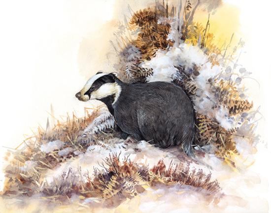 Ian Bowles Wildlife Artist